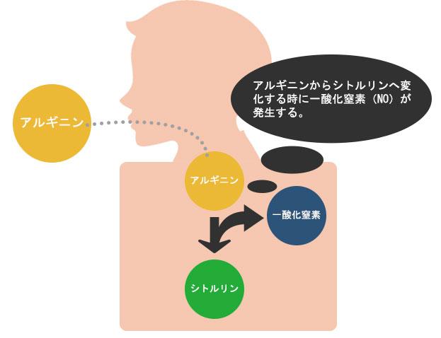 アルギニンがシトルリンへ変化する時に一酸化窒素を生成