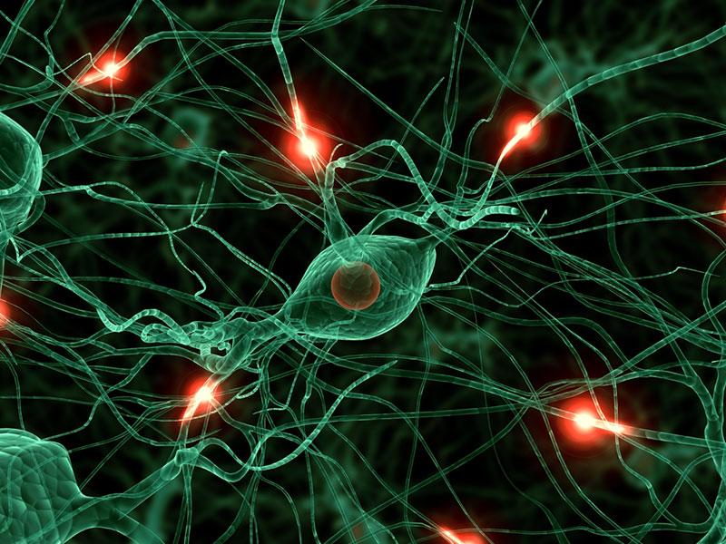 勃起に関わる自律神経の仕組み